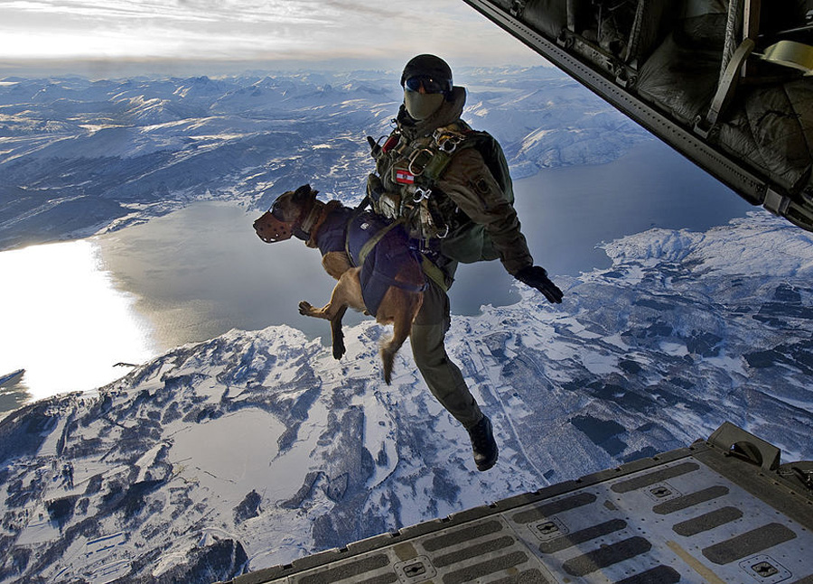 Skydiving Dogs